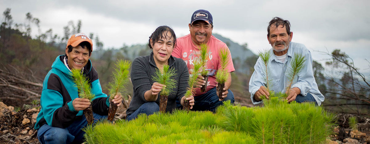 4 agriculture workers holding pine trees in their hands in a rural background