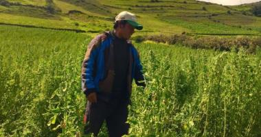 Avocado and quinoa in the Andes: small farmers exporting and improving resilience to climate change